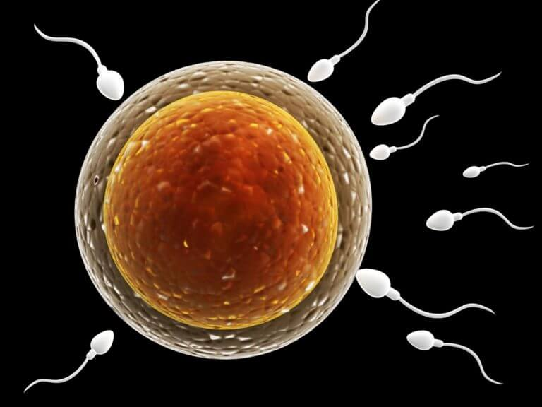 Fertility Pregnyl (HCG)